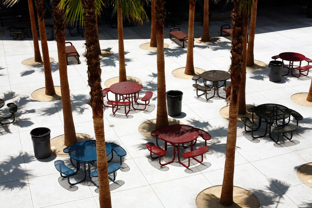 Palm trees and tables at Miguel Contreras Learning Complex